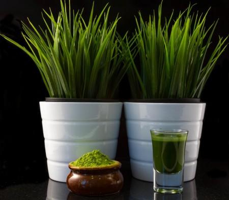 Premium Organic Wheat-Grass Powder